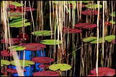 Branddam (www.nielsdejgaard.dk) Tags: kander siv tisvildehegn pond firepond waterlilies reeds