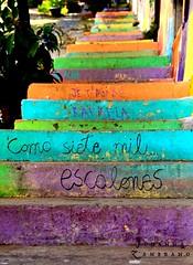 Como siete mil escalones (LEJZA) Tags: chile street streetart hot hippies stairs calle colours shine colores verano hippie felicidad letrero happies escaleras valpo calor escalones mensaje happi valaparaiso frase cerroalegre sietemil