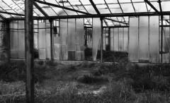 8284.old (Greg.photographie) Tags: old blackandwhite bw film analog 50mm minolta noiretblanc 400 17 xg1 foma rokkor r09