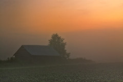Barn In A Sunset Mist (k009034) Tags: 500px weather copy space finland matkaniva oulainen outdoors rural scene agriculture architecture barn birch countryside evening fields fog nature night no people potato sky summer sunset teamcanon copyspace ruralscene nopeople