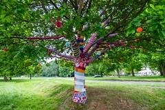 Yarn Tree rear (alsib) Tags: nature mayday yarntree wrappedtree yarnbomb fujixt1