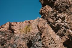 5R6K2751 (ATeshima) Tags: arizona nature havasu