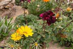jardn (f_campos) Tags: ugijar alpujarra granada flores amarillo rojo bonito precioso fernando campos lopez naturaleza increible belleza