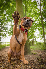 MHP (3 of 4) (d3max) Tags: charity rescue dogs canon canine volunteering staffie sbt rehoming 5dmk3 martinhillphotography woodgreenanimalcharity