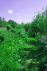FA_002 (Dutch_Chewbacca) Tags: nature netherlands spring fort sunny dijk brabant 1877 landschap 1880 waterlinie nieuwe 1847 altena brabants hollandse uppel gantel uppelse schanswiel