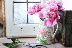 *** (s@ssyl@ssy) Tags: window windowwednesdays peonies cutflowers crusty rusty toolbox windowframe cuttings myshed backyard
