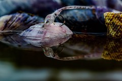 The squid (Brant He. Fageraas) Tags: macro beach colors canon reflections flyfishing mussels seatrout bluemussel saltwaterfly flyfishingart