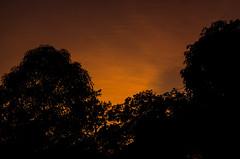 After sunset glow (keyaart) Tags: trees sunset nature silhouette konkan