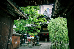 The Temple in the Kyoto () City Center - Rokkaku-do () (TOTORORO.RORO) Tags: green art japan temple japanese kyoto shrine district culture lifestyle tranquility calm holy zen   mindfulness wabisabi healing refreshing tender kannon   rokkakudo  powerspot    chohoji  nyoirin
