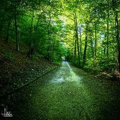 Silent Path (Ukelens) Tags: longexposure sunset summer sun schweiz switzerland stream sonnenuntergang suisse swiss sommer bern svizzera sonne wald sunbeam sonnenstrahl sonnenschein langzeitbelichtung sunstream wlder berncity ukelens