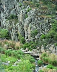 Actovskiy canyon (Yuriy Sanin) Tags: actovskiycanyon yuriy sanin congo4008 colour ukraine river rocks plants moss bushes creek             large format 4x5
