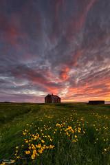 sland (Valeria Sig) Tags: flowers sunset sky nature landscape iceland sland