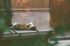 436  2016/6/20 (Natsuki_y) Tags: cats film cat canon tokyo 85mm snap eos1n straycat filmphotography