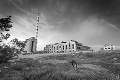 Before the storm (tzevang.com) Tags: greece bw dog old factory abandonned clouds storm