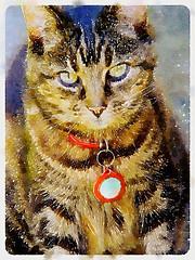Pearly Cat in Waterlogue (elizabatz.jensen) Tags: cat tabby watercolour blackandbrown photoapp waterlogue