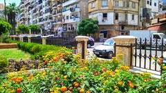 الصليبة (nesreensahi) Tags: اللاذقية الصليبة سوريا سورية latakia landscape lantana flowers plants clouds palm buildings park trees street nature city colorful