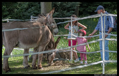 DSCF9223 (Coen David) Tags: father donkey pap animali bimba asino bambina
