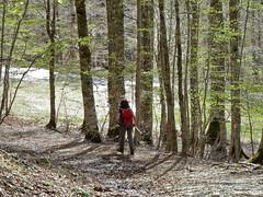 Escursionismo Pollino - M. Pollino e Dolcedorme da Colle Impiso