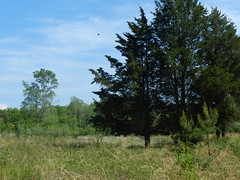Along the East Creek Trail (Christine_Ray) Tags: new pine forest state reserve national jersey pinelands barrens belleplain belleplaincapemayandparvin