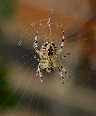 big spider scary (katiehanaa) Tags: hair spider colours different legs clear huge eight