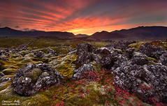 Sunset gone Berserk - Autumn at Snfellsnes, Iceland (orvaratli) Tags: autumn sunset color fall grass lava iceland colorful north arctic blueberry volcanic snfellsnes