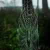 Sparkling threads (glukorizon) Tags: mist plant green animal groen web drop sparkle treetrunk dew droplet dier dauw stam druppel odc boomstam odc2 ourdailychallenge