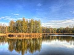 somewhere in Chełmek (jarrowka ( )) Tags: autumn trees water woda jesień chełmek jarrowka favescontestfavored