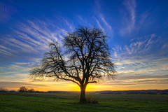 At First Light (Undertable) Tags: morning blue autumn sky ngc herbst himmel blau sonnenaufgang morgen baum hdr firstlight newday undertable tagesbeginn tagesanbruch 3000v120f assamstadt slicesoftime oliverbauer olétusfotos bestcapturesaoi herbsthausen elitegalleryaoi mygearandme mygearandmepremium mygearandmebronze mygearandmesilver mygearandmegold mygearandmeplatinum mygearandmediamond blinkagain photographyforrecreationeliteclub flickrstruereflection1 flickrstruereflection2 flickrstruereflection3 flickrsfinestimages1 flickrsfinestimages2 flickrsfinestimages3