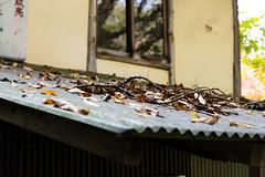 _DSC4016.jpg (Osamu1965) Tags: park bridge autumn sky fall forest landscape nikon zoom hiroshima   nikkor    vr afs     d600 2485mm    afsnikkor2485mmf3545gedvr 3545
