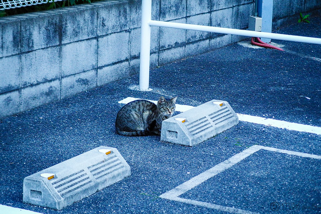 Today's Cat@2013-11-20