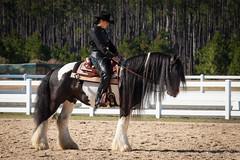 Meetup_Horses_1-19-14-4902.jpg (RobBixbyPhotography) Tags: meetupjacksonvillehorsesequestrian