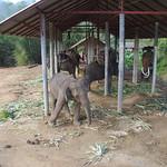 Thailande 0931 thumbnail
