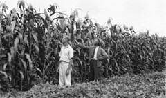 Bob Heil inspects 4H popcorn project with club leader A. L. Heil, 1941 (Orange County Archives) Tags: california history corn farming historical southerncalifornia orangecounty agriculture orangecountyarchives orangecountyhistory
