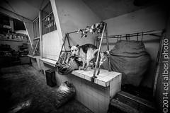 Carnicería de lama (Eduardo Albesi) Tags: bolivia perros potosí sonya7 feb2014 ilce7