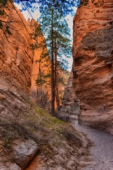 Slot Canyons of New Mexico (Jeff Clow) Tags: newmexico nature landscape tentrocks slotcanyons ©jeffrclow jeffclowphototours