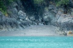 _MG_4600a (markbyzewski) Tags: fish alaska baldeagle ugly glacierbaynationalpark