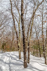 Snow Shoeing in Boarderland Park (Southern New England Photography) Tags: park winter snow tree canon unitedstates massachusetts parks newengland trail northamerica snowshoeing canton sigmalens boarderland eos70d sigma1750mmf28dcoshsm