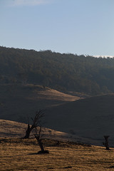 a timeless touch (keith midson) Tags: trees sunset afternoon touch dry drought tasmania plains