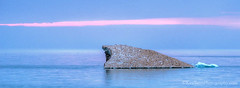 Lake Michigan ... ? (Ken Scott) Tags: sunset sculpture usa ice spring michigan lakemichigan greatlakes april hdr freshwater 2014 leelanau whaleback 45thparallel panoramacrop kenscottphotography kenscottphotographycom