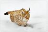 www.durmaplay.com_oyun_wallpaper_17463.jpg (http://www.durmaplay.com) Tags: winter sun snow nature animal cat germany mammal bayern nationalpark kat wildlife bigcat lynx duitsland naturpark bayerischerwald beieren zoogdieren hvhe1 hennievanheerden ©hennievanheerden wwwdurmaplaycom