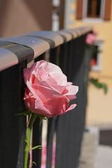 Riconoscimento affettivo di coppia: Perla ed Elisa (Provincia di Gorizia) Tags: provincia coppia riconoscimento pariopportunità gherghetta