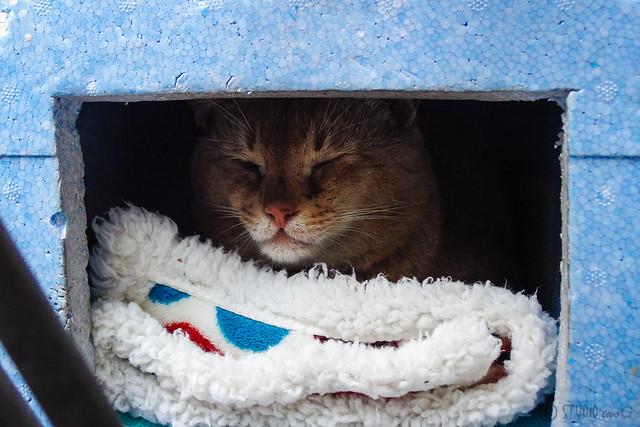 Today's Cat@2014-05-04