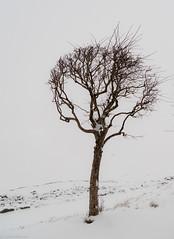 2009_0121-0013.jpg (Andrey.Illarionov) Tags: winter europe russia petersburg petrodvorets      petergof