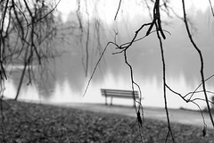 a meaningful silence (bluechameleon) Tags: blackandwhite bw blur fog vancouver reflections bench bokeh branches lostlagoon bluechameleon artlibre sharonwish bluechameleonphotography