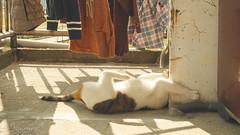 (Nicholas  H) Tags: morning light pet sun cute sunshine cat sunrise good pussy stretch solarium rise 寵物 貓 可愛 refresh 貓咪 寵物攝影 喵星人