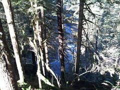 20150215_124455.jpg (mjfmjfmjf) Tags: oregon hike most columbiagorge viewed eaglecreek 2015 eaglecreektohighbridge