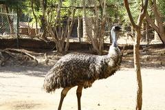 Avestruz Zoo (fuerteventurafun) Tags: animal zoo fuerteventura avestruz