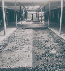 Shadow play (ainulislam) Tags: light shadow blackandwhite monochrome silhouette hall perfect path walk human poles pathway timing
