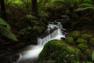 Moss, Water, Ferns and Rocks