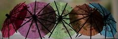 Les uns contre les autres (Et si, et si ...) Tags: lumire couleurs naturemorte loanne ddicace parapluies